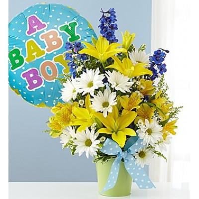 Little Baby Boy Bliss BB